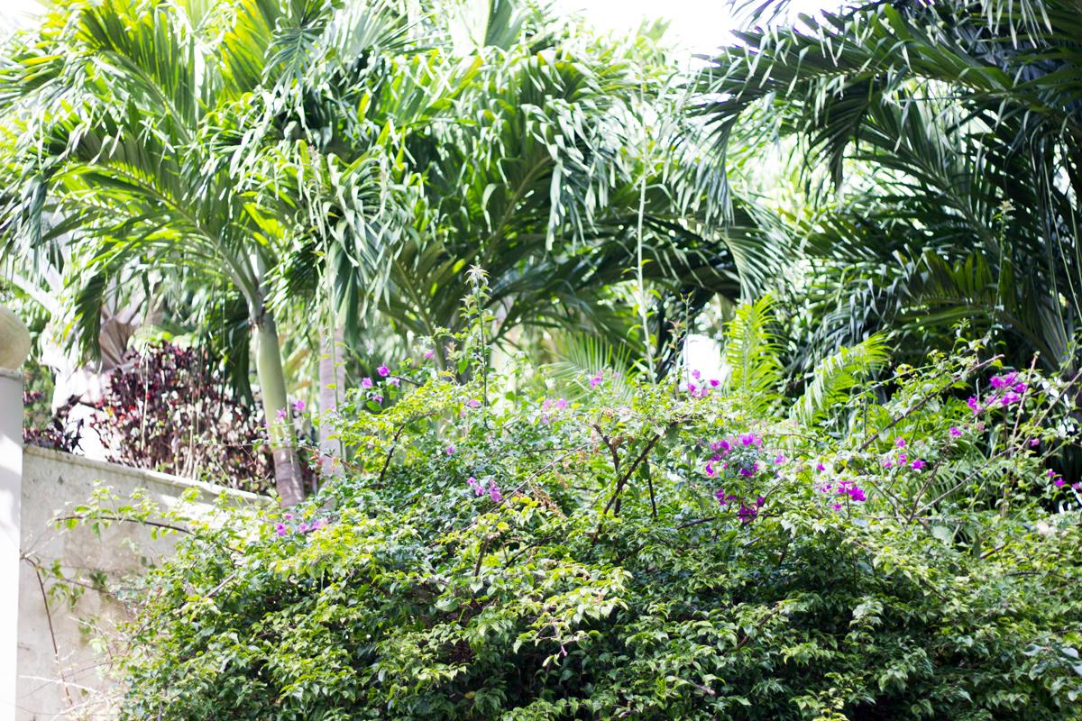 ritz-carlton-coconut-grove
